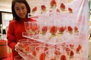 大分県が新ブランドイチゴ「ベリーツ」  生産者の夢の自信作市場へ