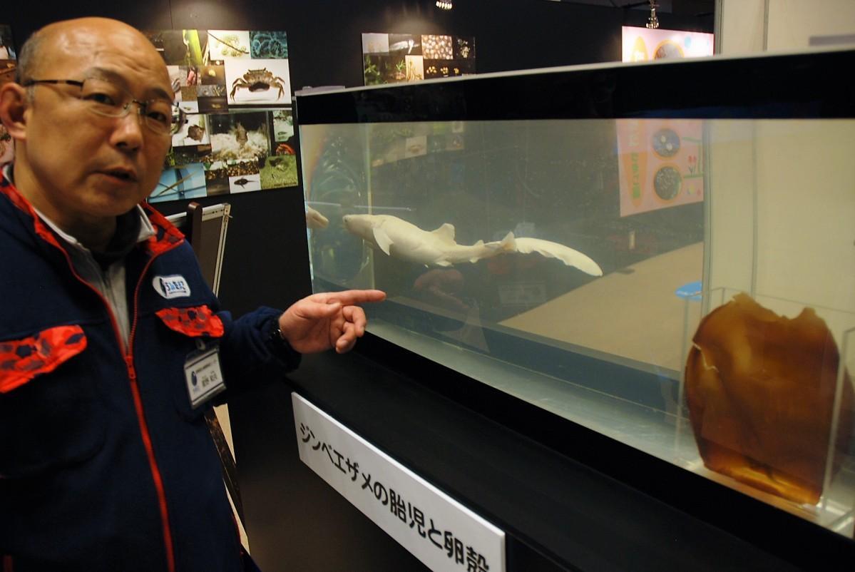 ジンベエザメの標本について説明する星野さん