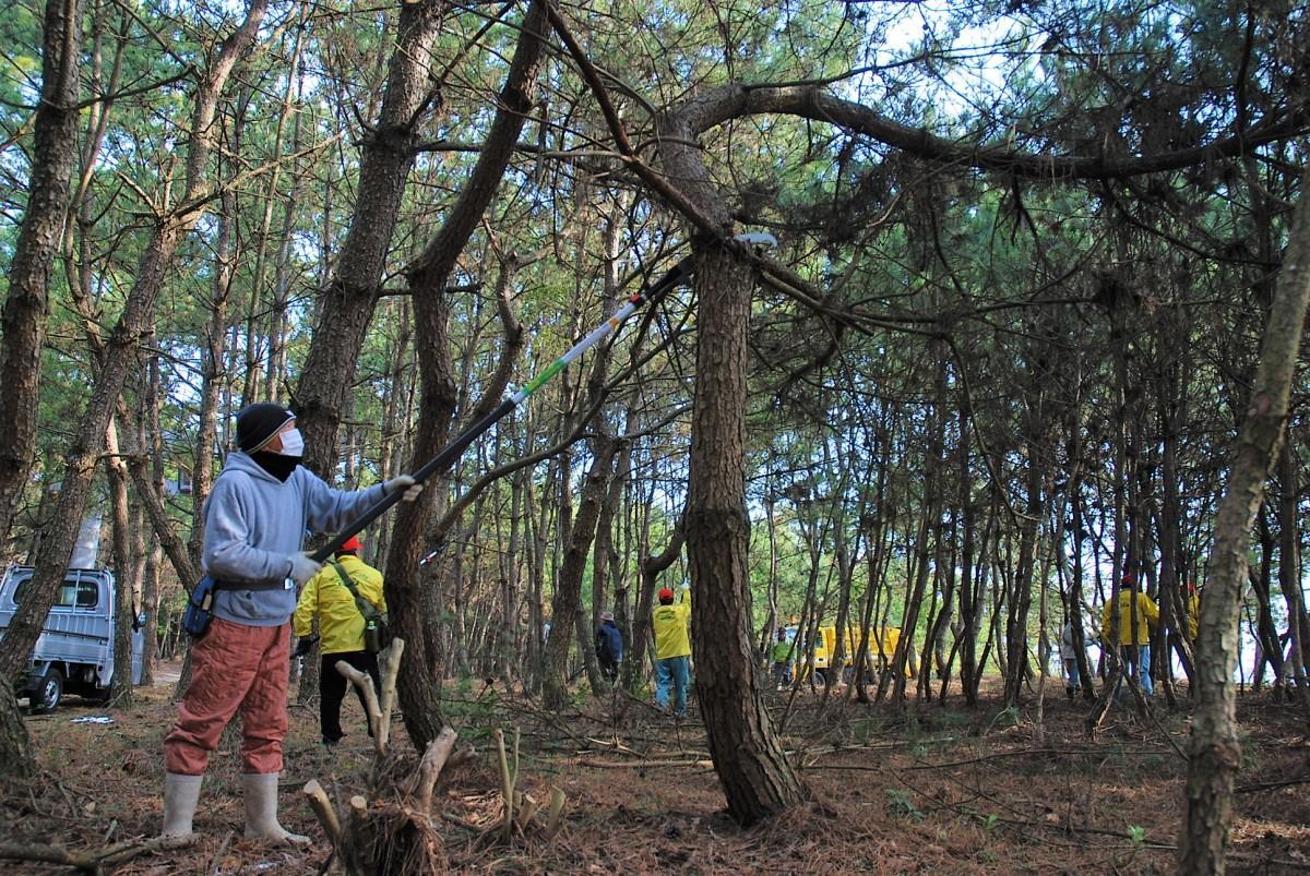 枝を切り払いすっきりとした奈多狩宿海岸