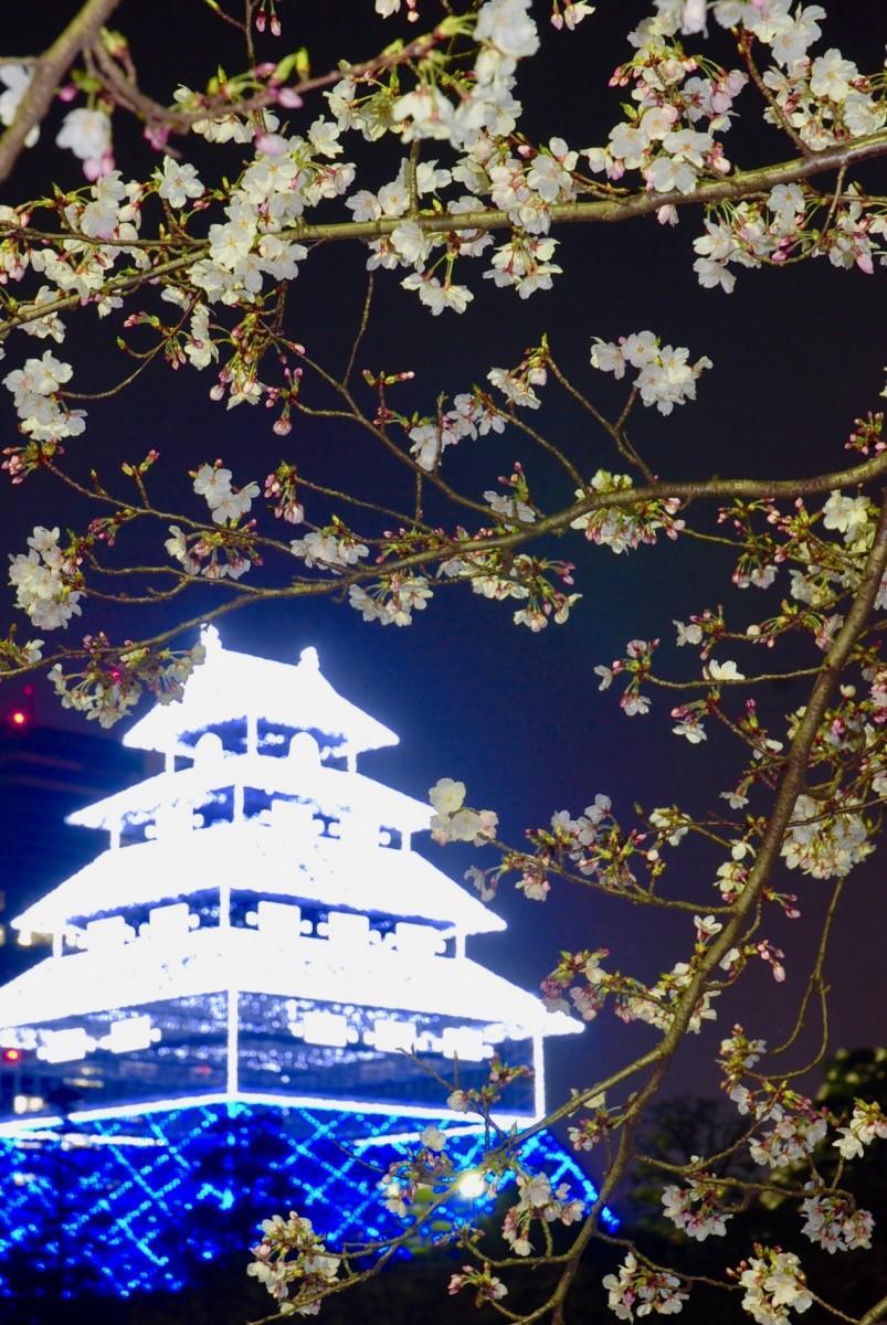 桜の季節に再点灯した仮想天守