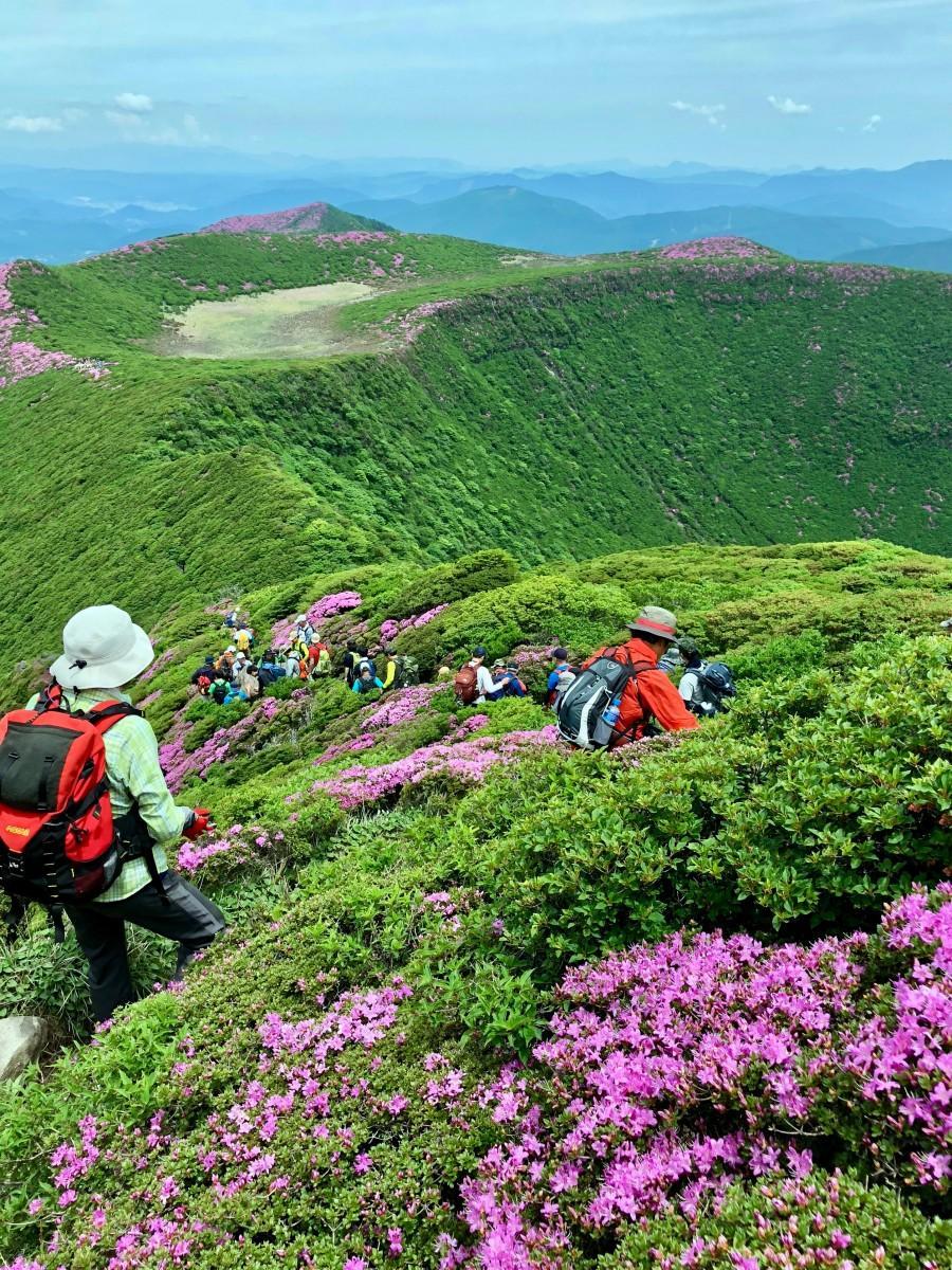 連山を望む中に広がる新緑とミヤマキリシマ