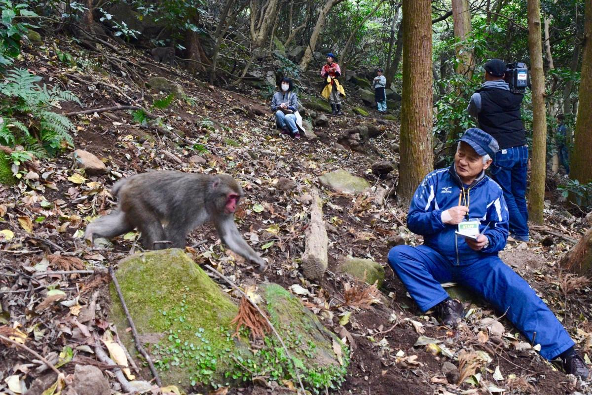 サルを調査するボランティア