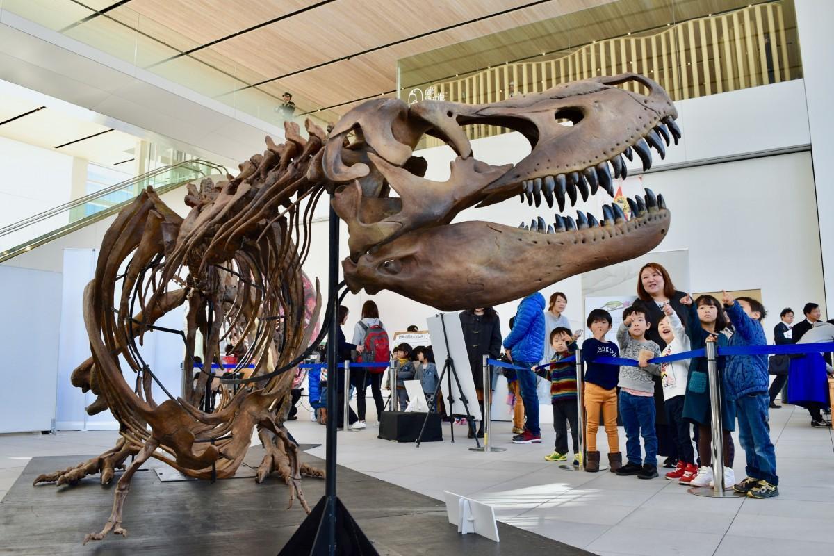 大分県立美術館で始まった「OPAMに恐竜がやってきた!」