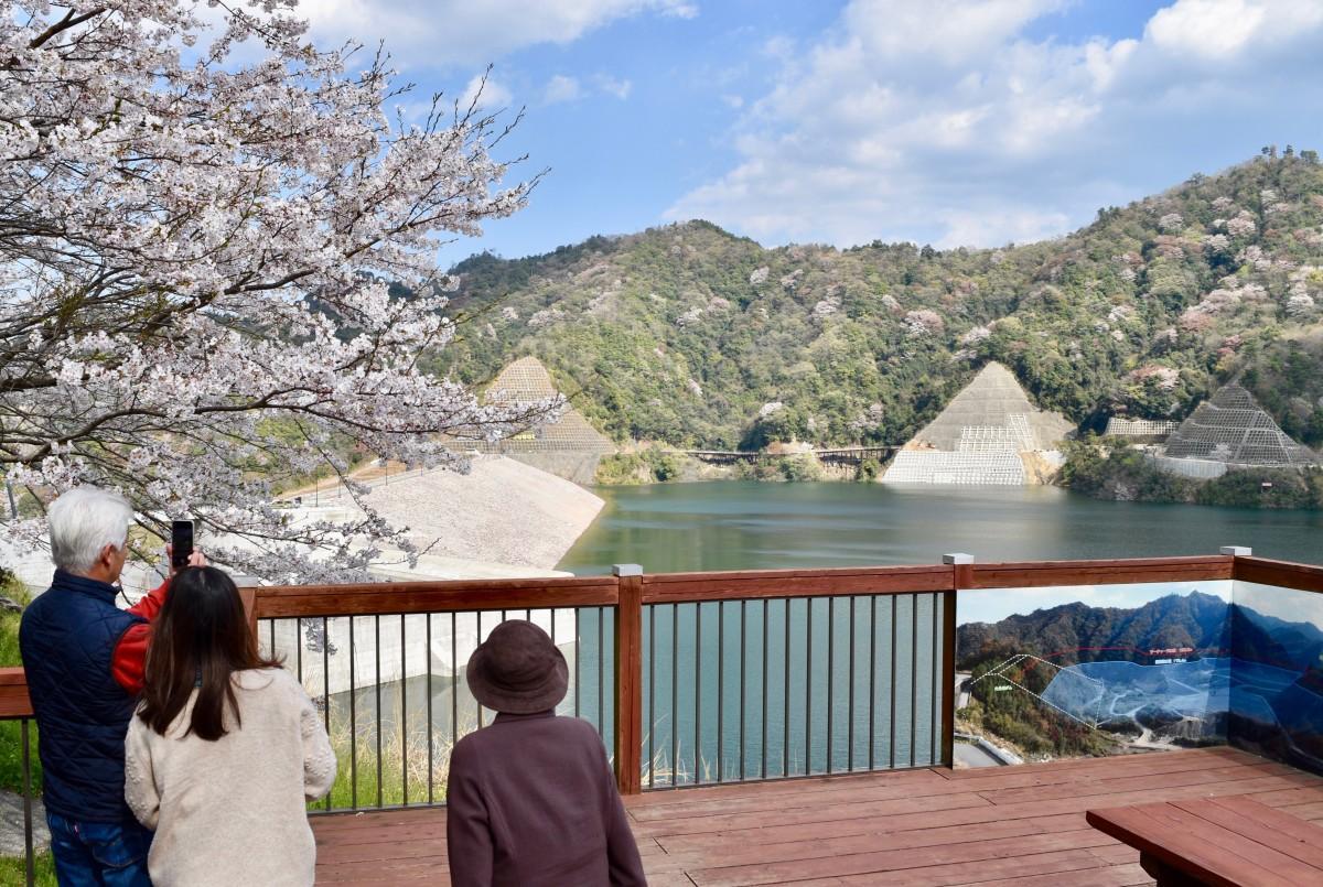 春の撮影スポットとなっている大分川ダム(4月2日15時ごろ撮影)