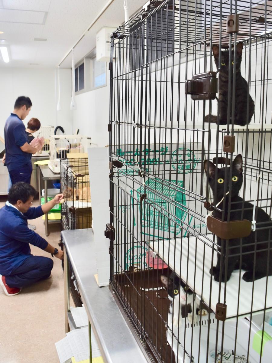 譲渡飼養室で新しい飼い主を待つ猫