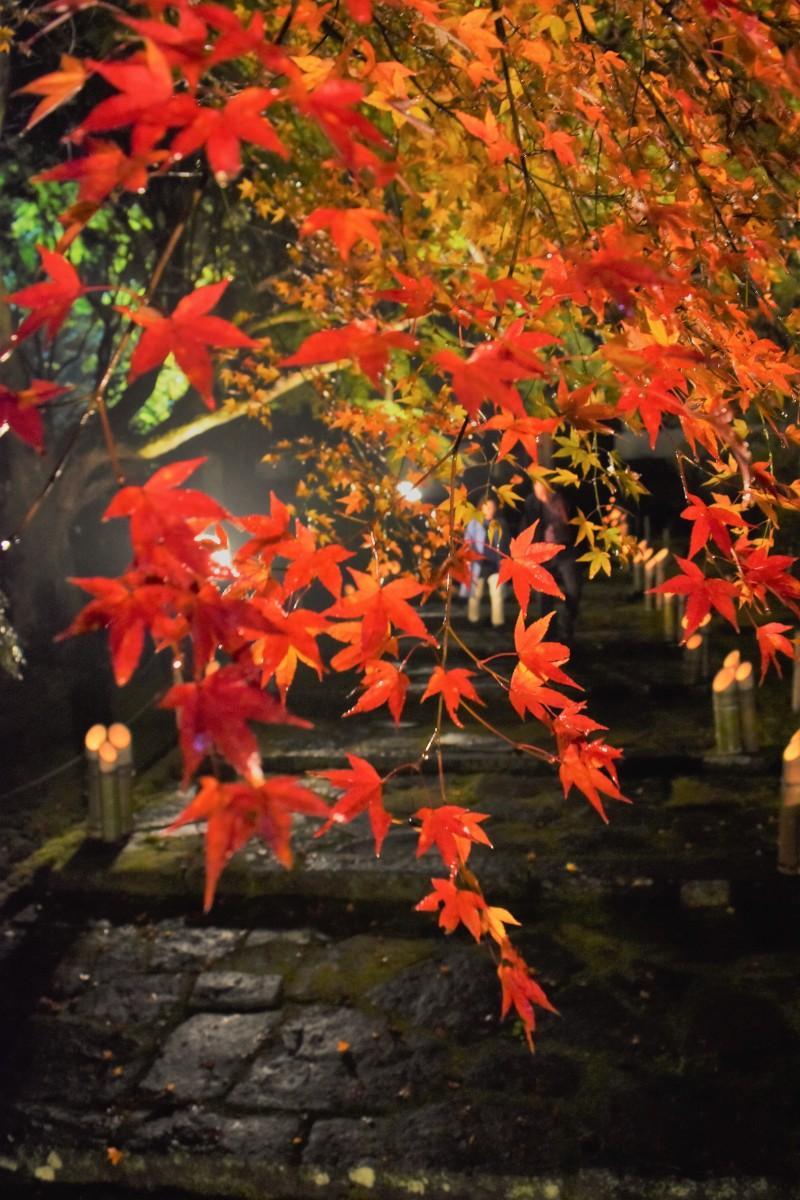 闇夜にくっきり紅手形― ライトアップが始まった臼杵市の普現寺(11月22日17時55分ごろ撮影)