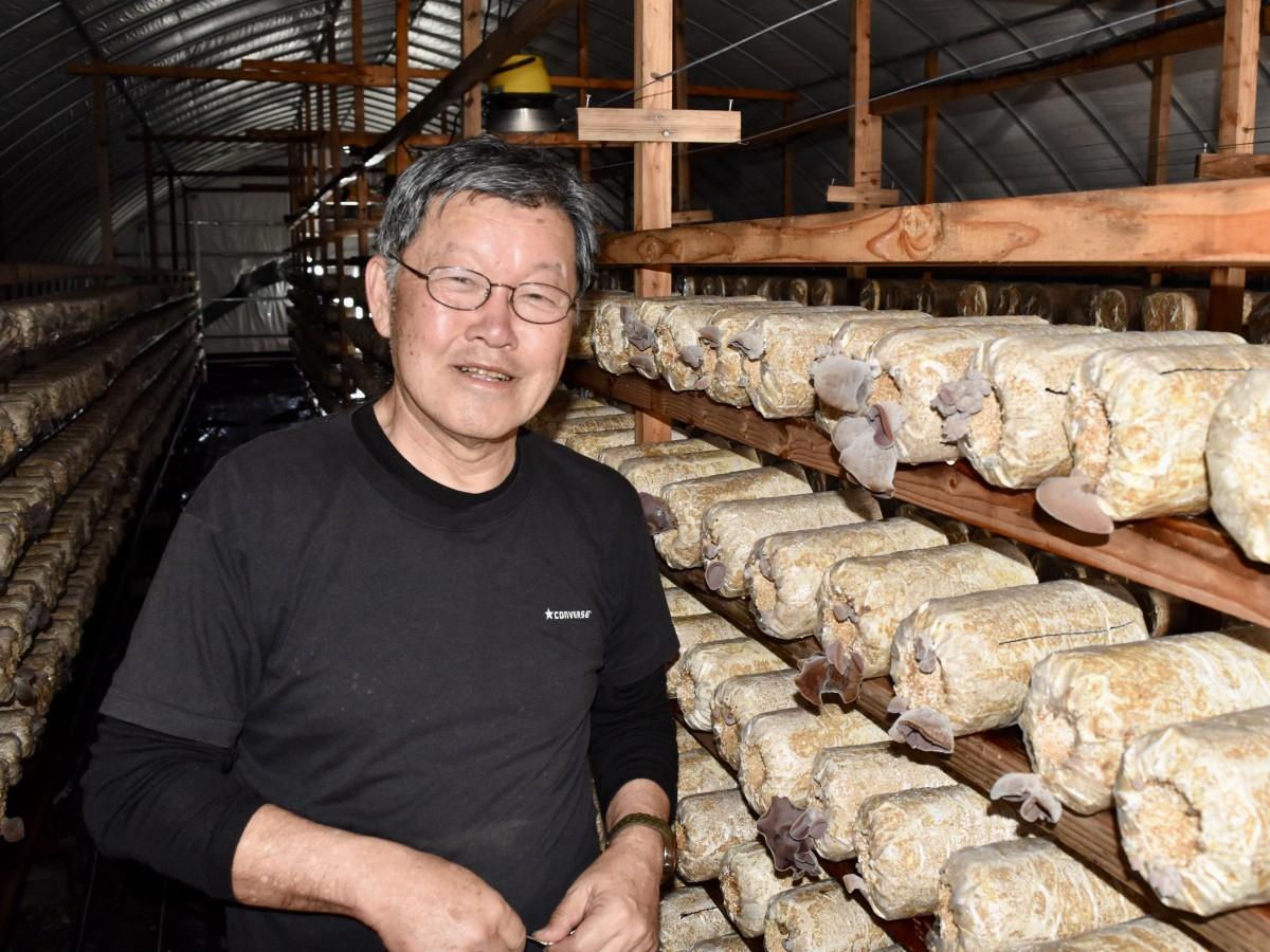 生キクラゲを冷凍販売するジョイファーム大分の葛城さん