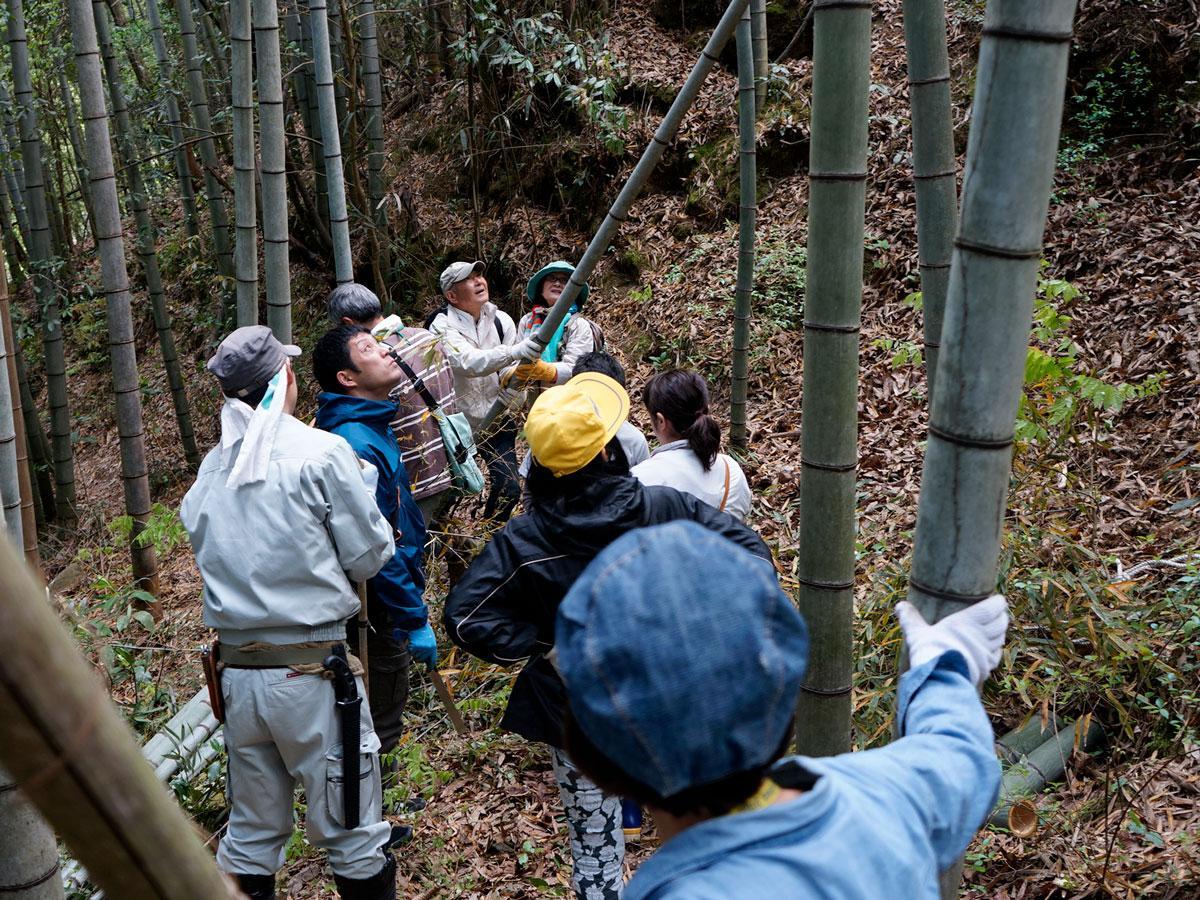 切った竹を慎重に倒していく参加者