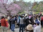 岡崎・南公園の梅林にオカザえもん-握手や撮影求める人でごった返す