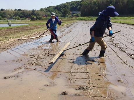 「ババ引き」と呼ばれる農具を使って苗を置く目印になる升目を描く様子(写真提供=「稲中」今村真理さん)