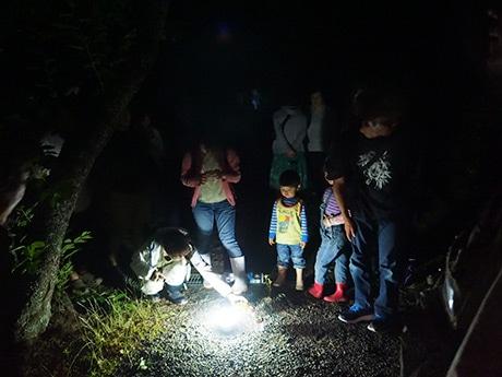 隠岐自然村のスタッフが捕らえたホタルを観察する参加者ら