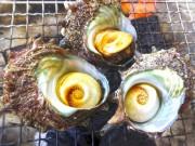 隠岐でサザエ漁解禁 「つぼ焼き」「刺し身」など、さっそく舌鼓