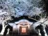 隠岐・西ノ島で夜神楽公演、満開の桜ライトアップも