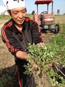 さいたま西で「れんげ米」田起こし始まる-レンゲ育て「安全・おいしい」米作り