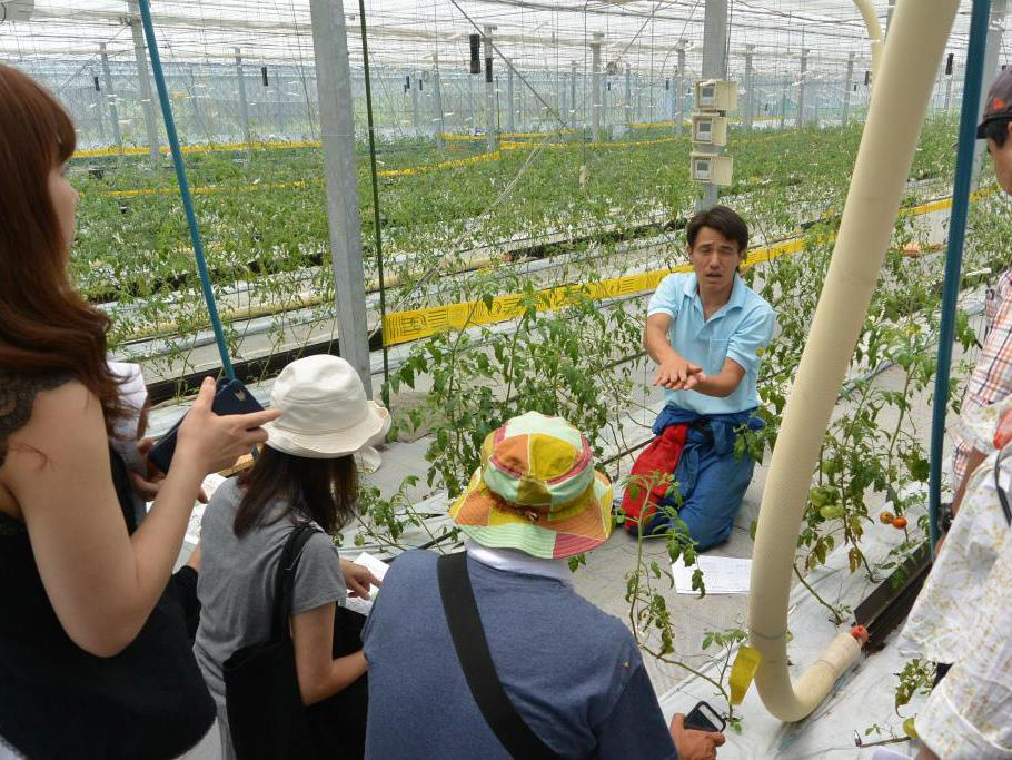 さいたま市西区のトマト農家「さいたま榎本農園」訪問の様子