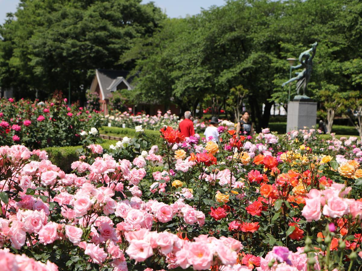 与野公園の見事なバラ