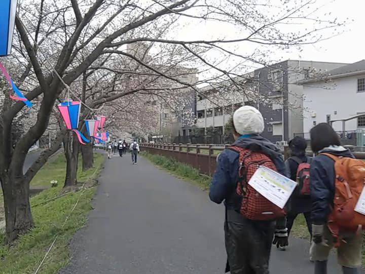 桜回廊を歩く参加者