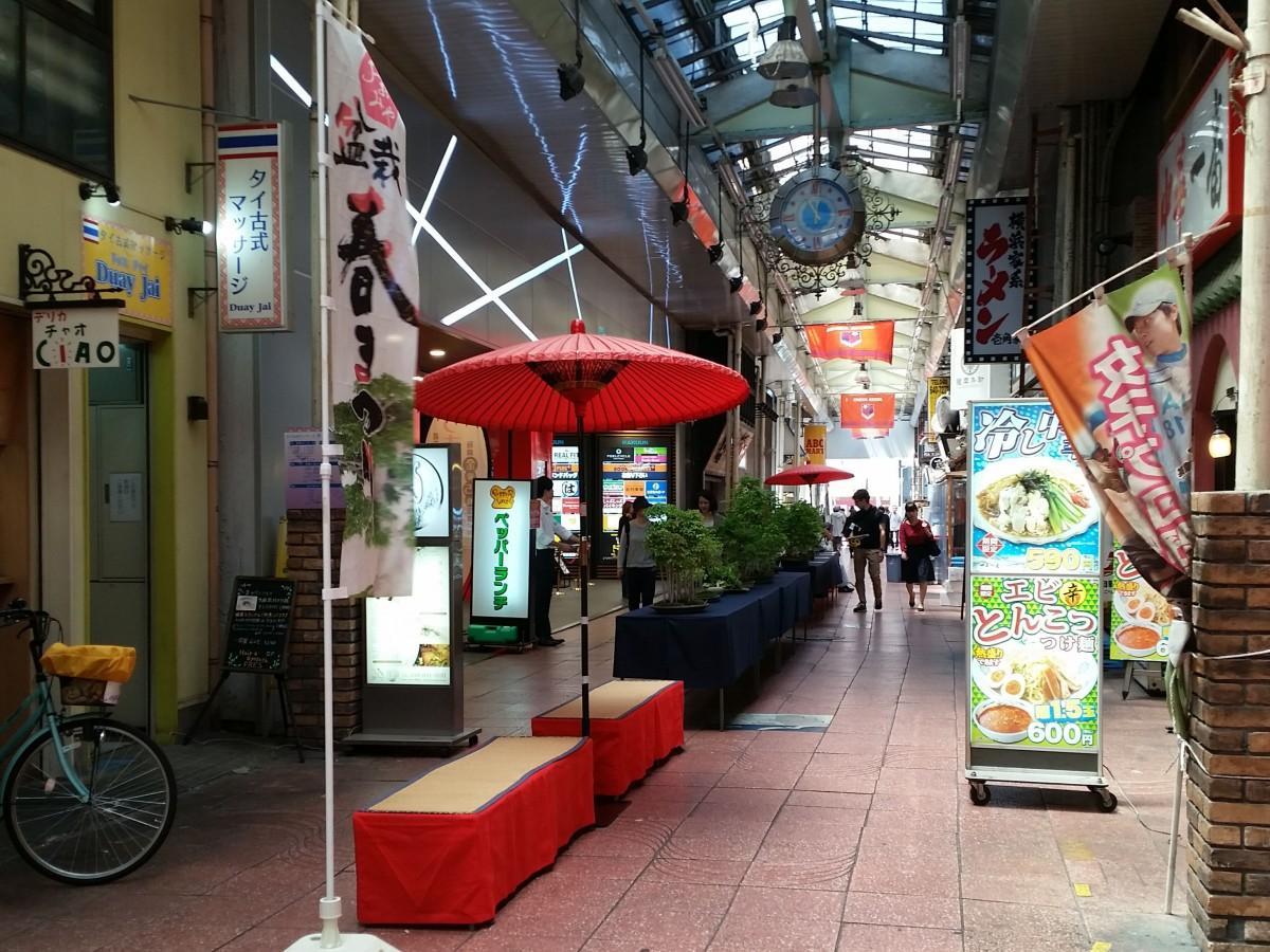 商店街に展示される盆栽