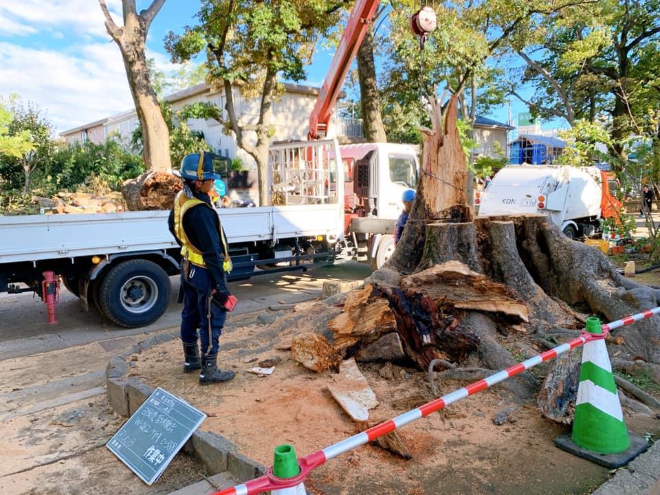 台風19号によって倒木した氷川参道の欅(けやき)の撤去作業の様子