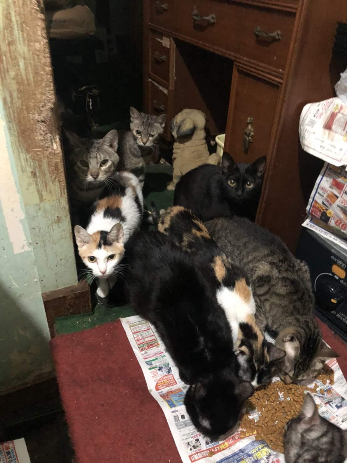 猫 埼玉 保護