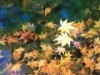 大宮公園の紅葉が見頃に カエデやメタセコイアが池を彩り写真映えも