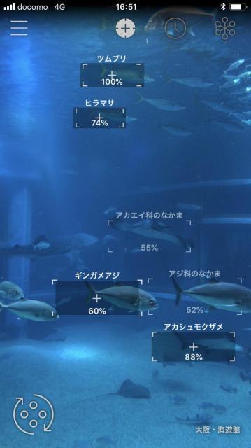 スマートフォンをかざして魚の名前を調べるイメージ