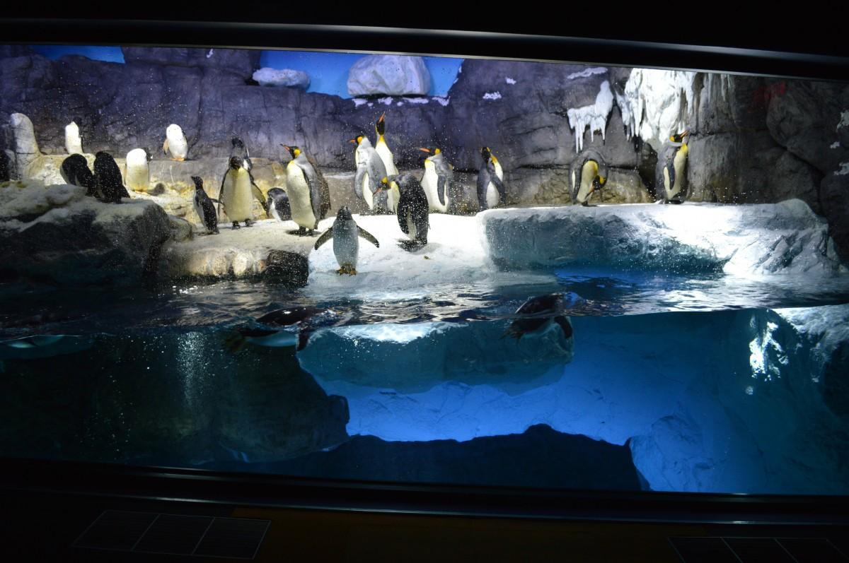 大規模改装した新水槽「南極大陸」
