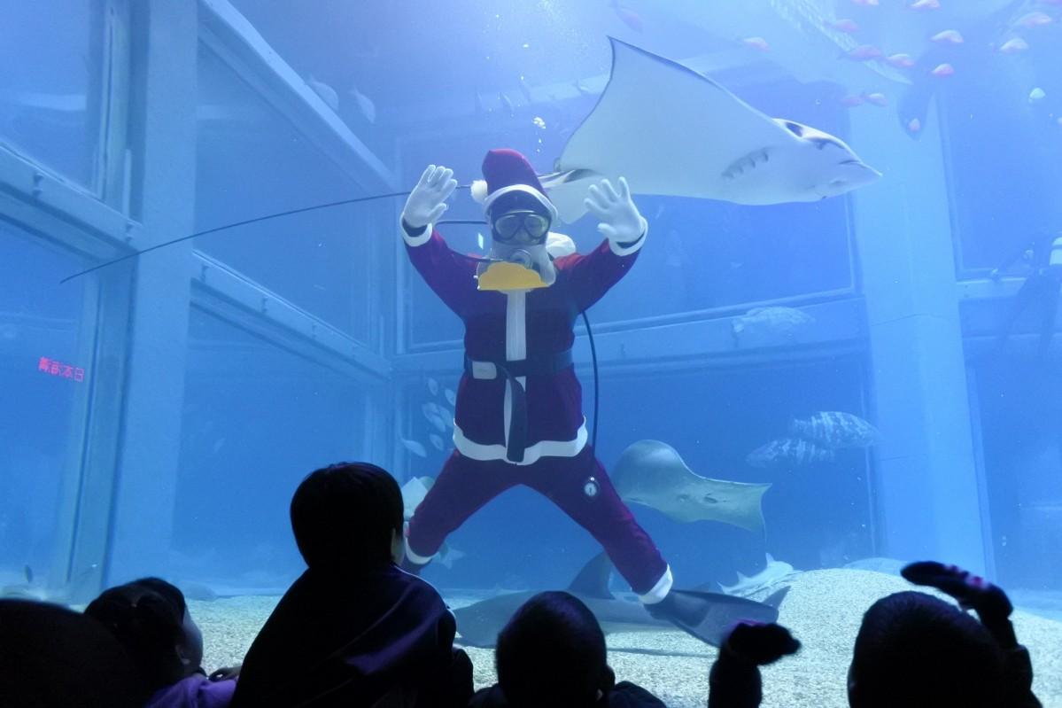 サンタダイバーが水槽からメリークリスマス