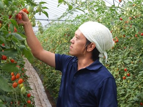 トマト栽培に取り組む東優也さん