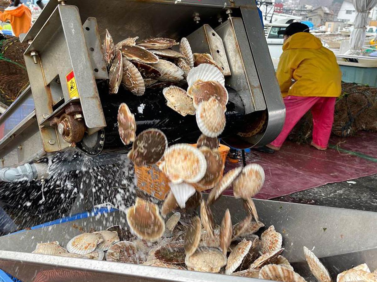 小樽のホタテ漁