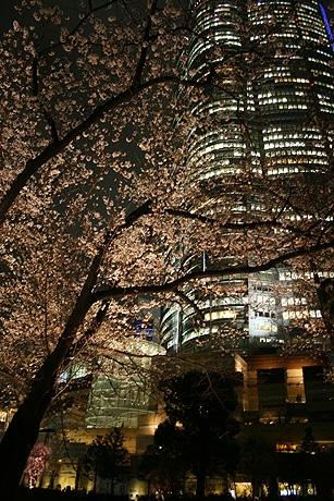 写真=桜のライトアップ(毛利庭園)