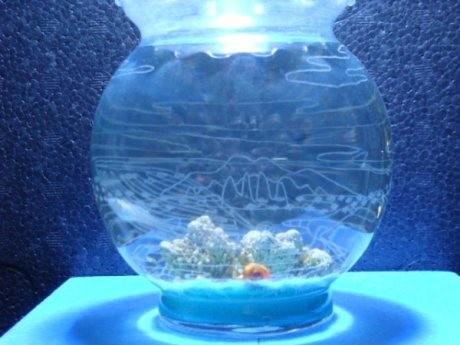 「海」と題された水そー屋さんの水槽作品。