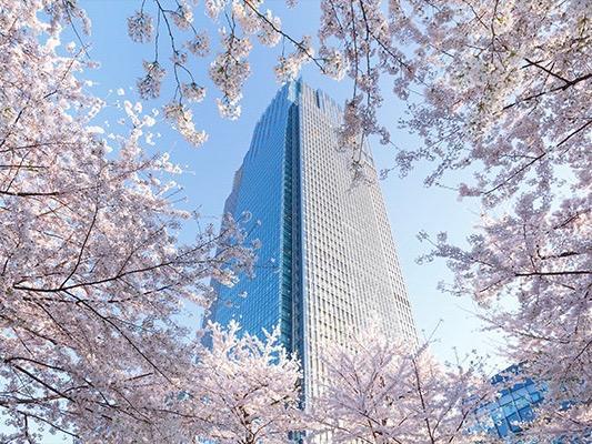 全長約200メートルにわたって桜を楽しめる「MIDTOWN BLOSSOM 2018(ミッドタウン・ブロッサム)」