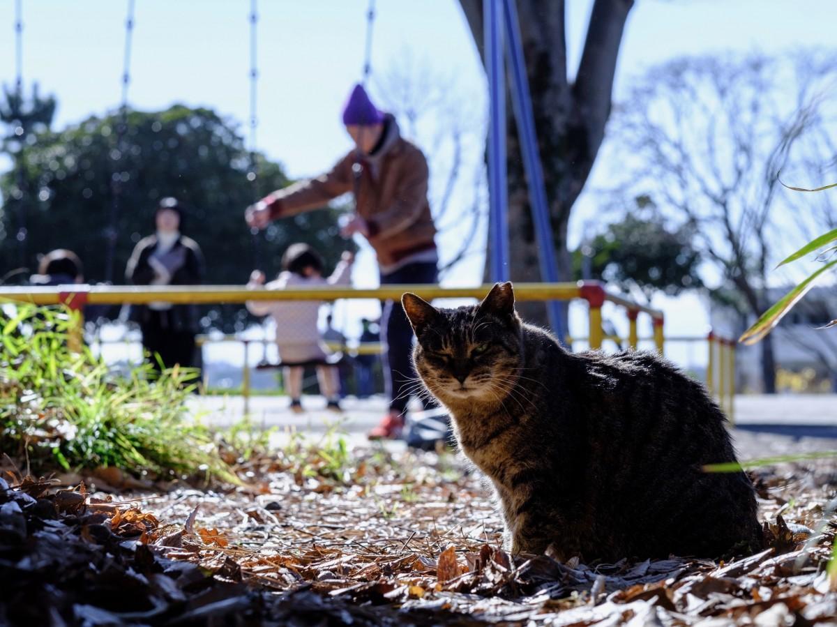 松本伸夫さんの写真展「猫と人が奏でる時間」