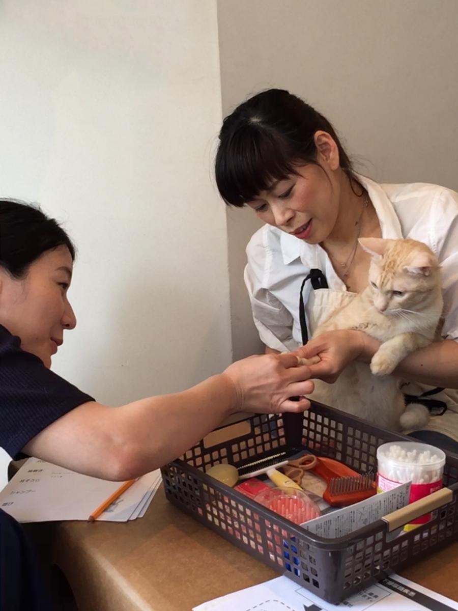 猫の爪切りのレクチャーを受ける参加者