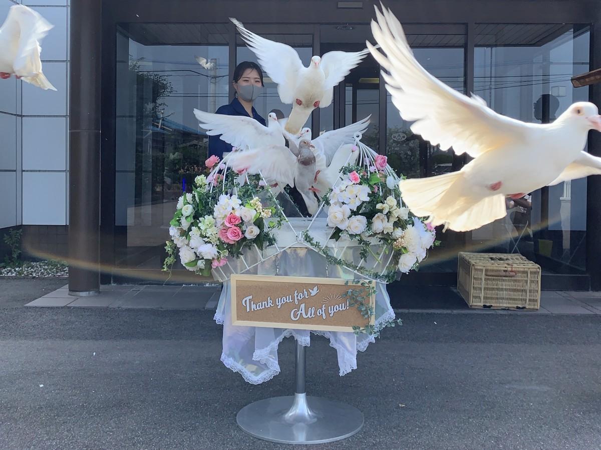 「九州コーユー」の放鳥サービスで結婚式用の籠から飛び立つ白鳩