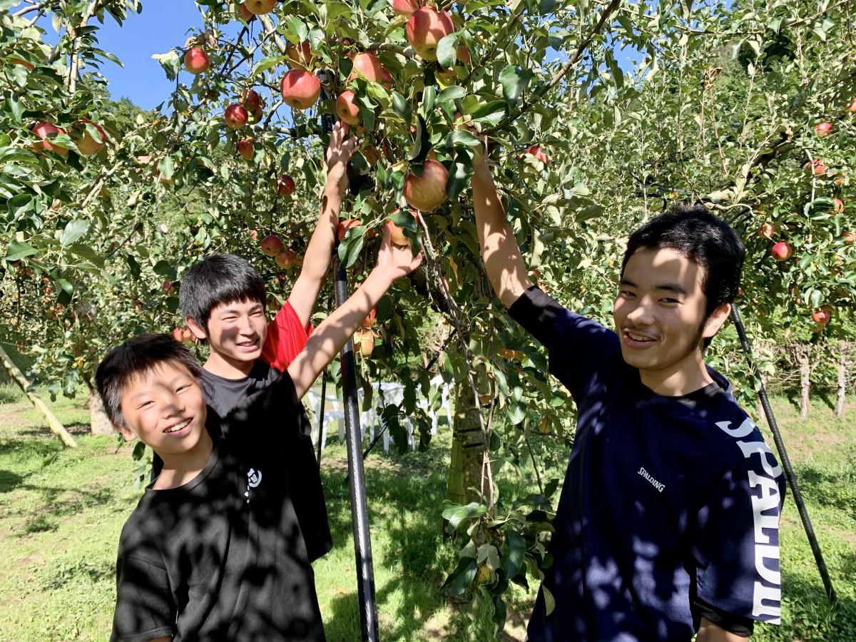 「まるじゅんリンゴ園」でリンゴ狩りする地元の小中学生