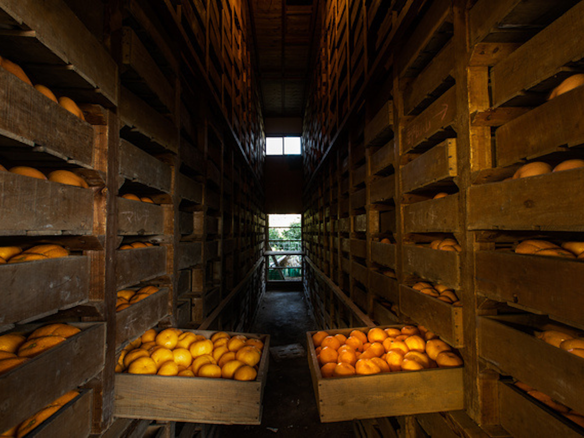 果物腐敗防止の実証実験を行っている「石橋果樹園」貯蔵倉庫
