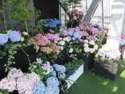 名古屋テレビ塔・屋外展望台に期間限定「あじさいガーデン」