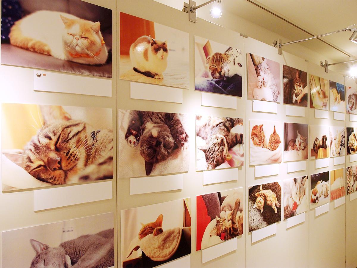 「ねこにすと」のSNS上で募集を募ったネコの写真が並ぶ