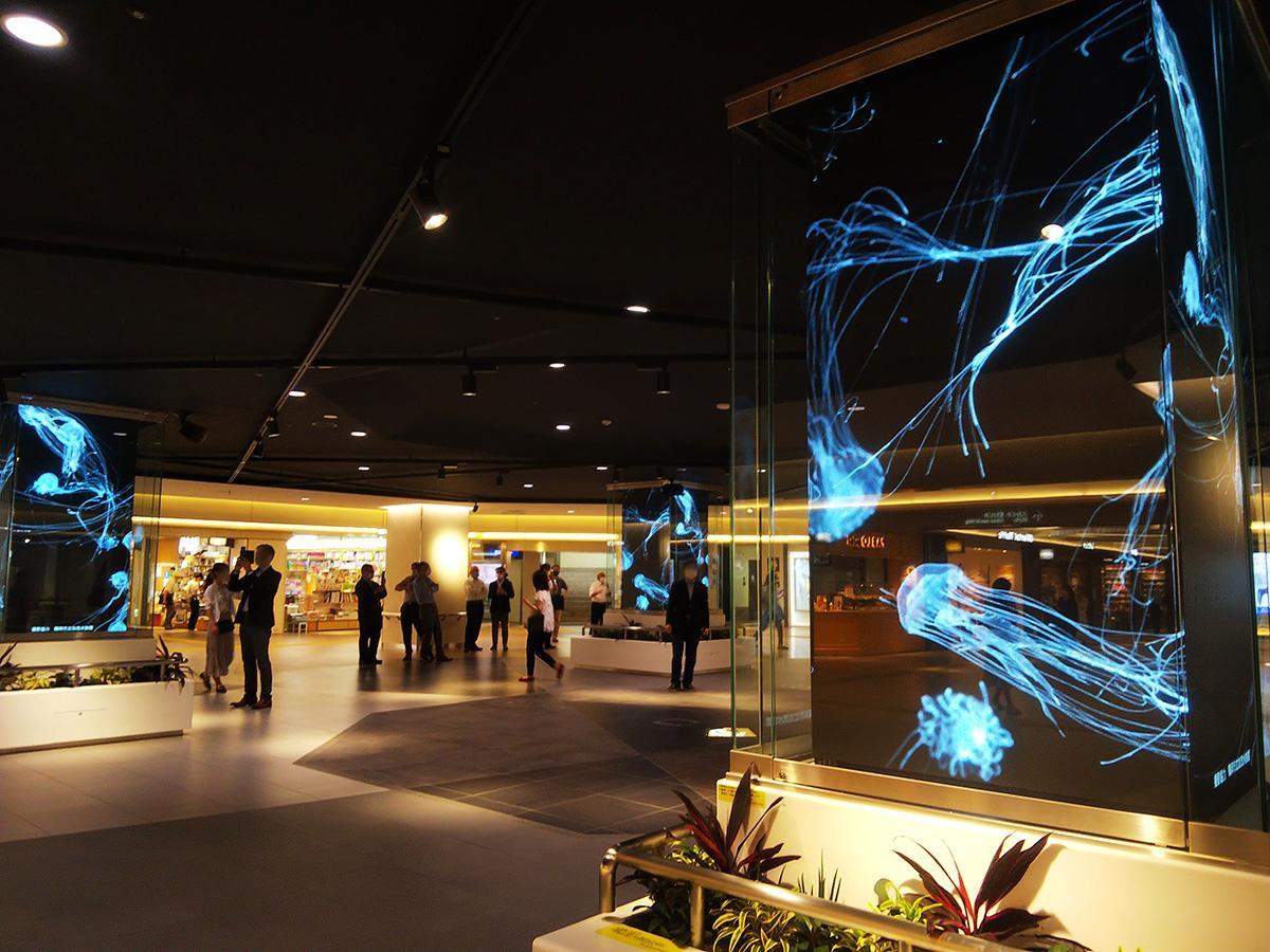 サカエチカ クリスタル広場ビジョンに放映されるクラゲの映像(画像提供=サカエチカマチ)
