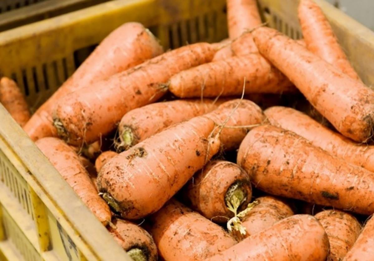 授業「目からウロコの野菜の新常識~にんじん農家が今考えていること」(画像提供=NPO法人大ナゴヤ大学)