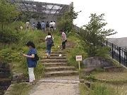 大橋ジャンクション内の緑化空間が一般公開 目黒区周辺の草地、水田など再現
