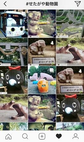 これまでに投稿された、ハッシュタグ「#せたがや動物園」の付いた写真