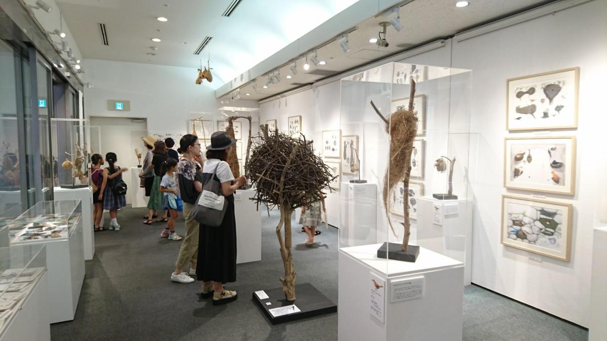 実物の鳥の巣が展示されている