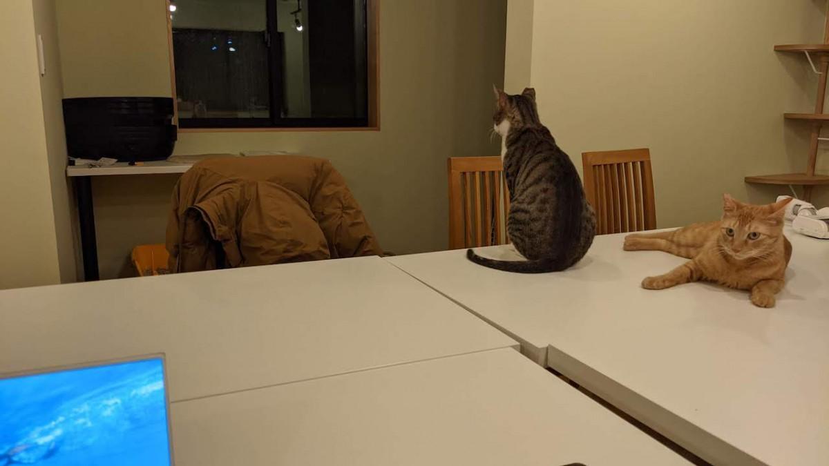 「駐在」する保護猫たち