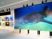 宮古で水中写真家・鍵井靖章さん写真展-「美しい海」に来場者笑顔