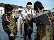 山田町で2年ぶり「鮭大漁祈願まつり」-サケのつかみ取りに100人挑戦