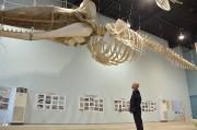 山田「鯨と海の科学館」、6月から本格改修工事へ-来年リニューアル