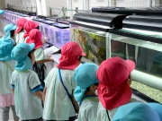 宮古の水産科学館で「磯の生物展」-近海の生物と触れ合う人気企画も